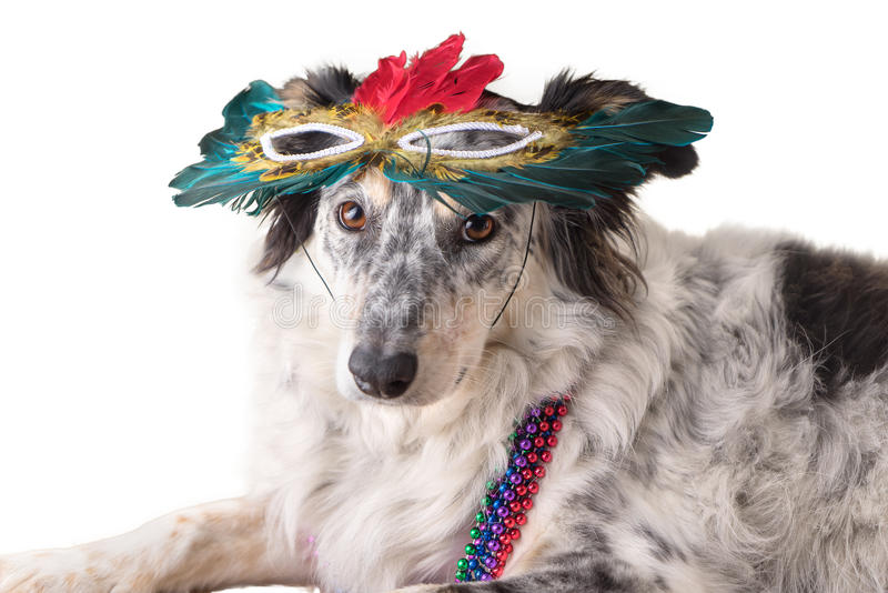 Chien portant le masque de Mardi Gras photos stock