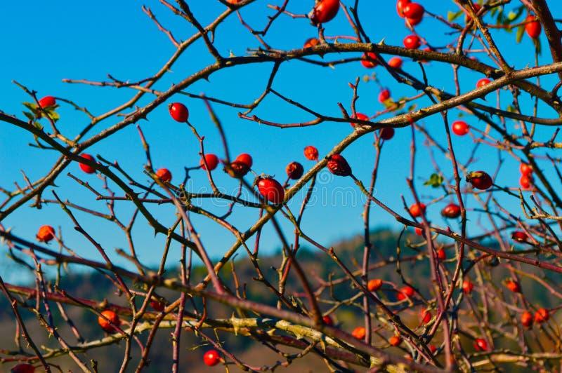 Chien-rose et ciel bleu images stock