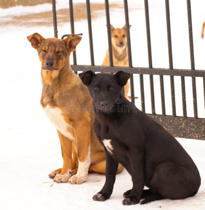 Chien sans abri malheureux dans l'abri de chien photographie stock libre de droits