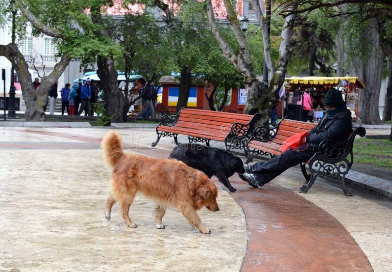 Chien sans abri sur la rue dans la ville de Punta Arenas image libre de droits