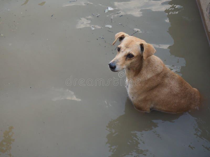 chien se baignant dans le Gange images libres de droits