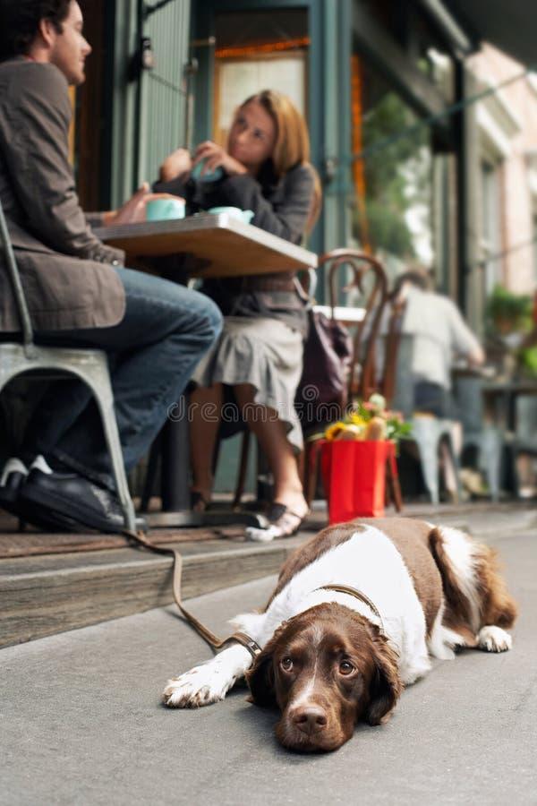 Chien se trouvant sur le trottoir en dehors du café image libre de droits