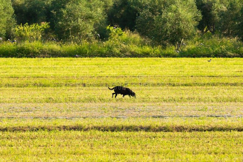 Chien seul dans une ferme Un paysage bucolique photographie stock