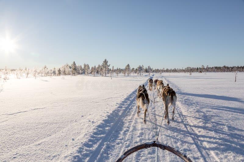 Chien sledding en Laponie images libres de droits