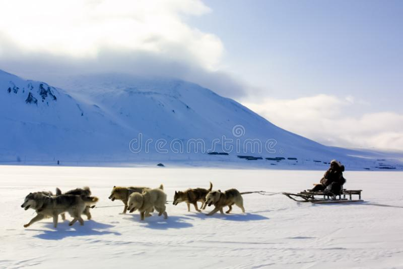 Chien sledding, transport dans Chukotka, tours de garçon en chariot photo stock