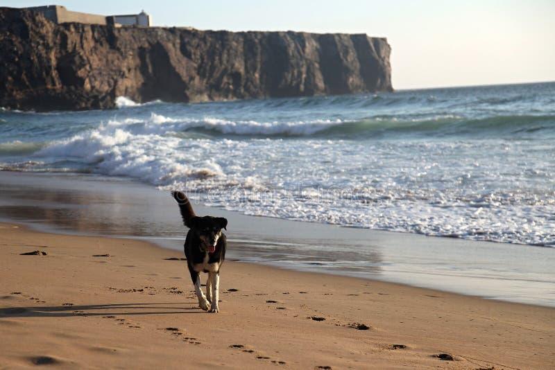 Chien sur la plage photos stock