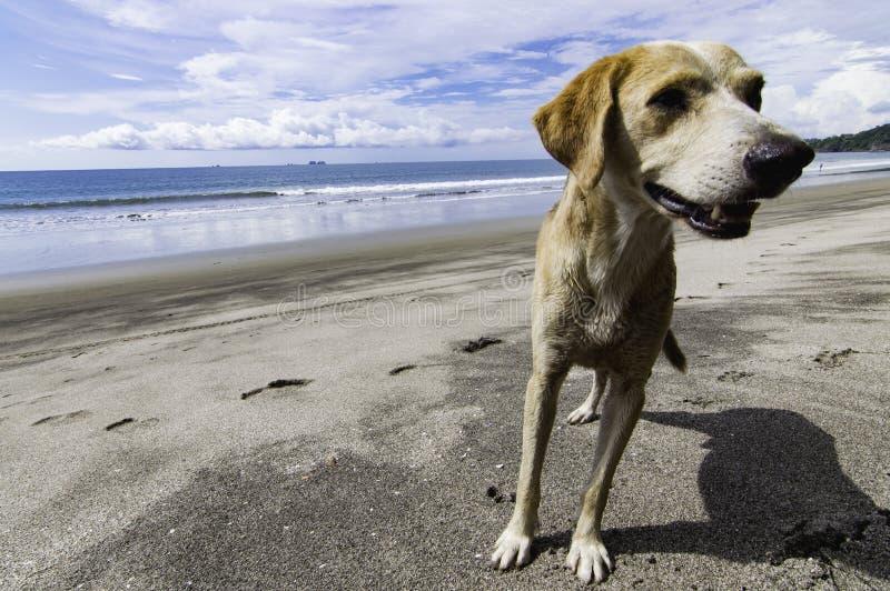 Chien sur la plage photo stock