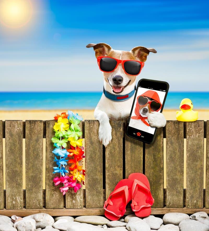 Chien sur la plage des vacances de vacances d'été photos stock
