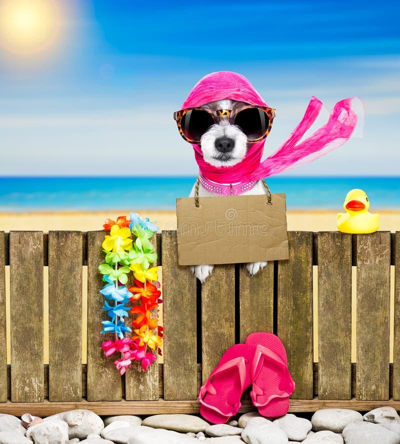 Chien sur la plage des vacances de vacances d'été image stock