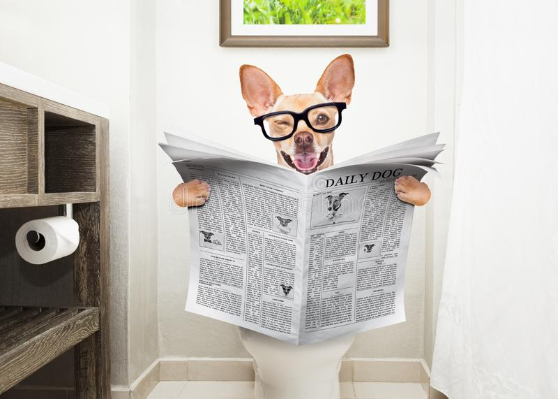 Chien sur le journal de lecture de siège des toilettes photo libre de droits