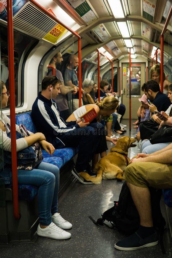 Chien sur le plancher dans la voiture de souterrain, le 3 juin 2018, à Londres photographie stock