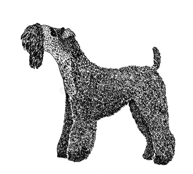 Chien terrier de bleu de Kerry illustration de vecteur