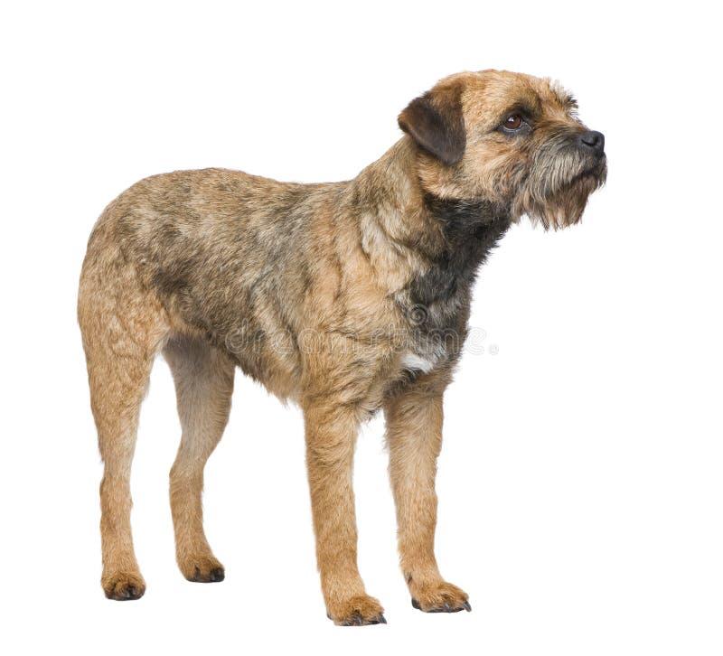 chien terrier de cadre images stock
