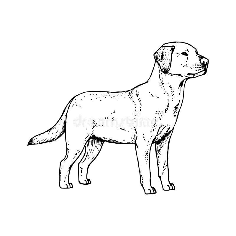 Chien tiré par la main Labrador Croquis de vecteur illustration libre de droits