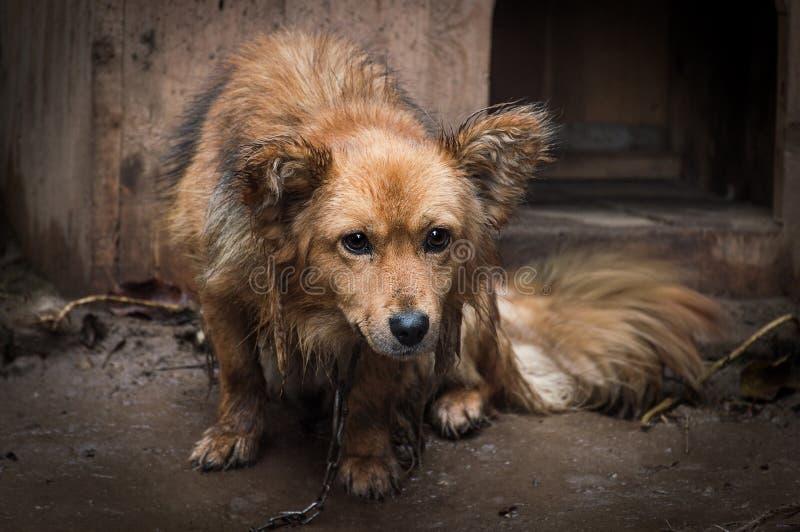 Chien triste sur une chaîne, animal, couleur, photo photographie stock libre de droits