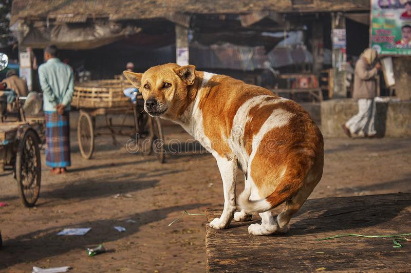 Chien photographie stock