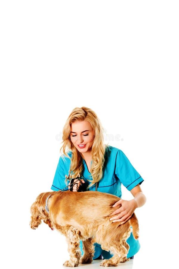 Chien vétérinaire femelle d'examinng de sourire de jeunes photo libre de droits