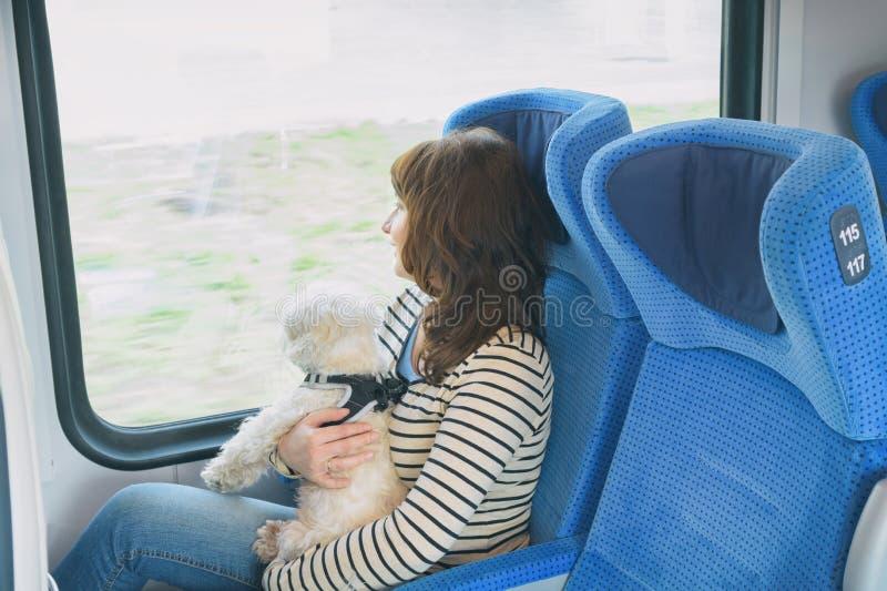 Chien voyageant par chemin de fer avec son propriétaire photos stock