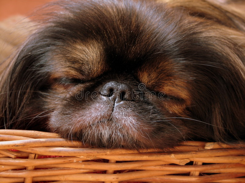 Chienchien images stock