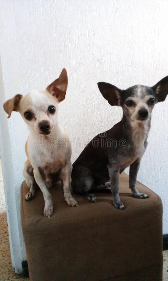 Chiens affectueux images stock