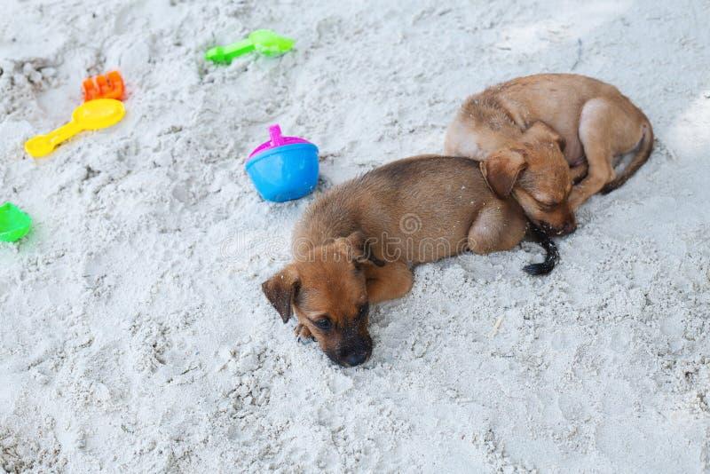 Chiens détendant et se reposant, se trouvant sur le sable à la plage des vacances de vacances d'été photo libre de droits