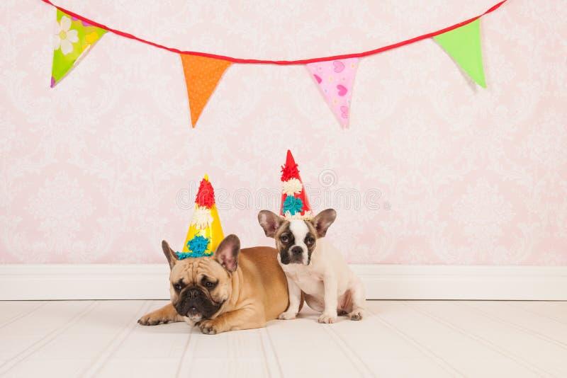 Chiens d'anniversaire photos libres de droits