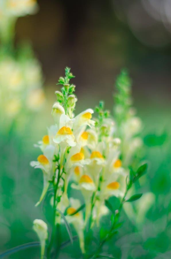 Chiens de fleur photographie stock