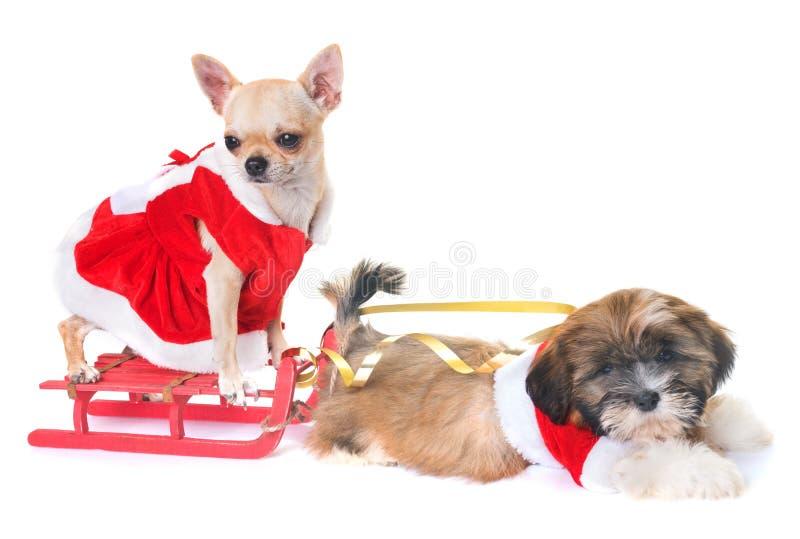 Chiens et Noël image libre de droits