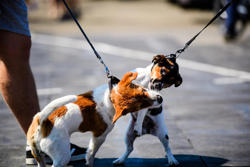 chiens ?motifs dr?les jouant sur une promenade image libre de droits