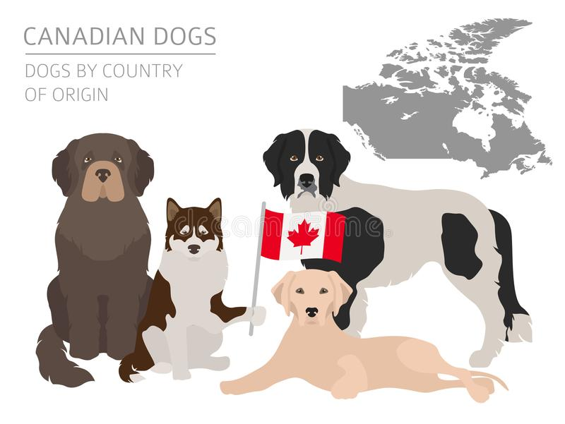 Chiens par le pays d'origine Races canadiennes de chien Temp d'Infographic illustration stock