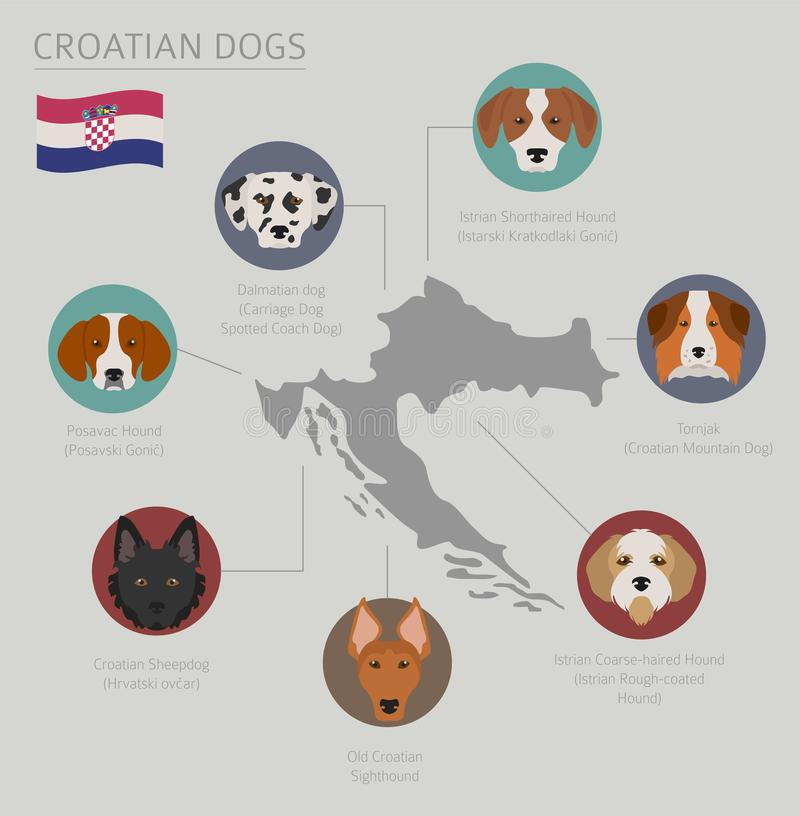 Chiens par le pays d'origine Races croates de chien Temp d'Infographic illustration de vecteur