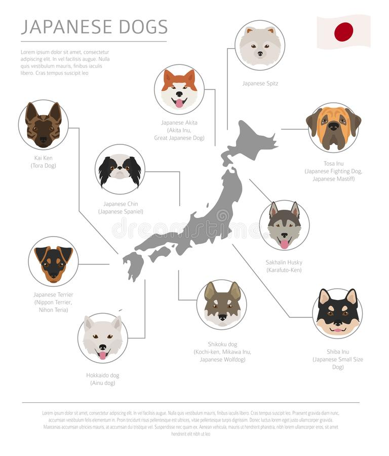 Chiens par le pays d'origine Races japonaises de chien Temp d'Infographic illustration stock