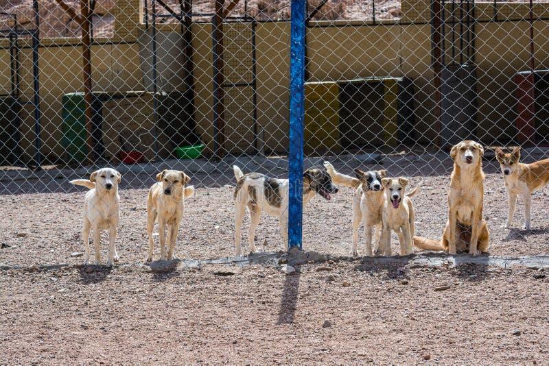 Chiens protégés contre le massacre et l'empoisonnement dans l'abri de chien dans Aqaba, Jordanie images stock