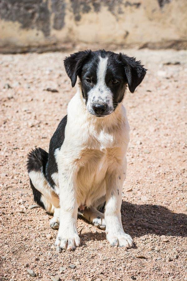 Chiens protégés contre le massacre et l'empoisonnement dans l'abri de chien dans Aqaba, Jordanie image libre de droits