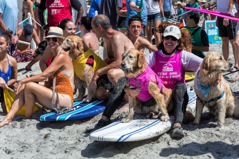 Chiens surfants, planches de surf, les gens sur la plage image libre de droits
