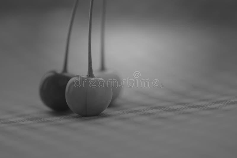 Chierries в серых тенях стоковые изображения rf