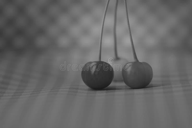 3 chierries в серых тенях стоковое фото rf