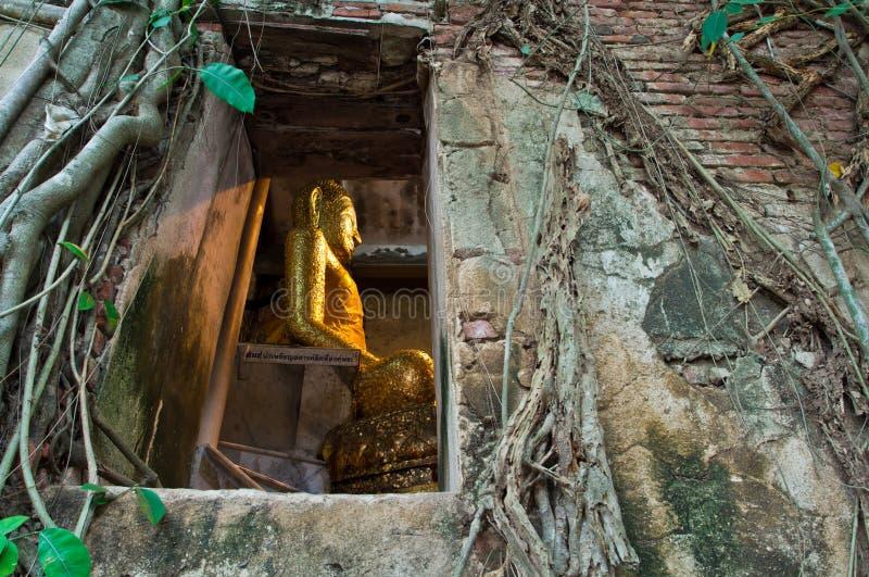 Chiesa buddista circondata dalla radice dell'albero immagini stock