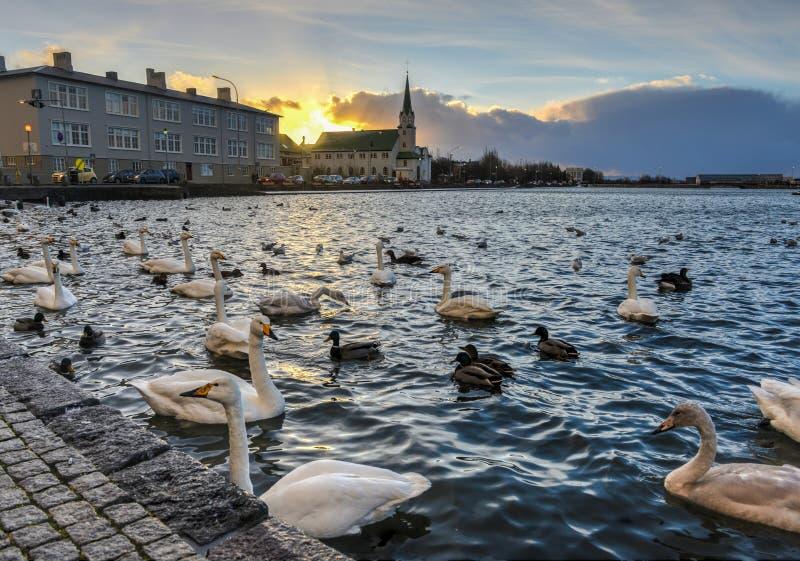 Chiesa libera di Reykjavik, Islanda. immagini stock libere da diritti