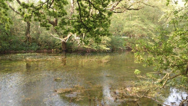 Chieveley village woods England stock photo