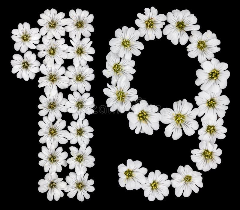 Chiffre arabe 19, dix-neuf, un, neuf, des fleurs blanches du ce illustration de vecteur