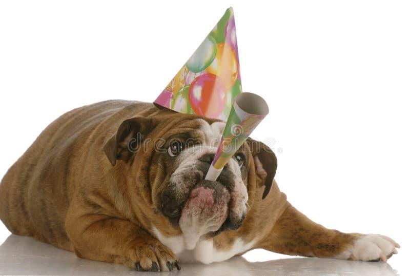 Chifre de sopro do cão do aniversário imagens de stock