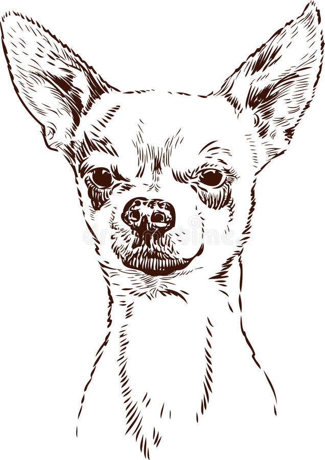 Download Chihuahua stock vector. Illustration of mexican, ears - 26995234