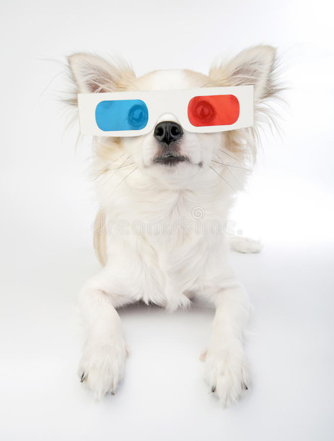 Download Chihuahua with 3d glasses stock photo. Image of puppy - 16556042