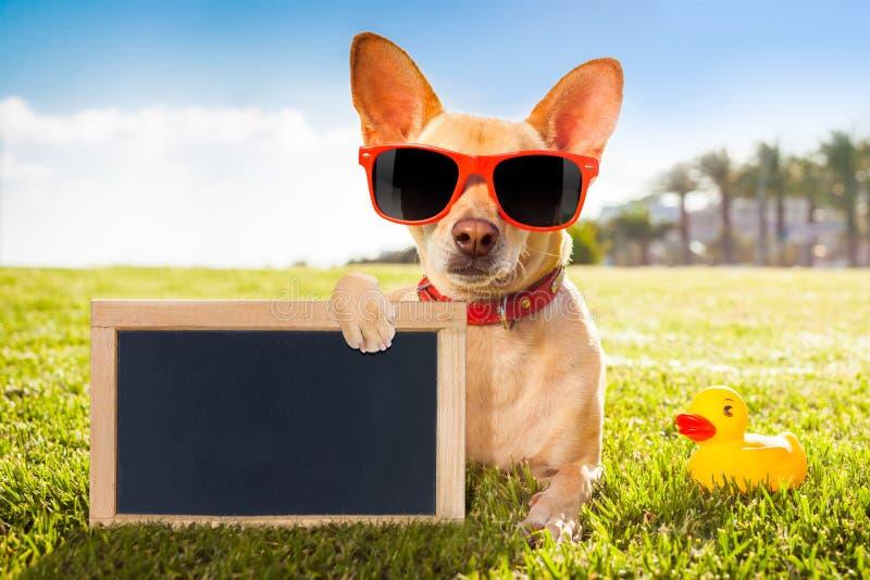 Chihuahua bij het park royalty-vrije stock foto