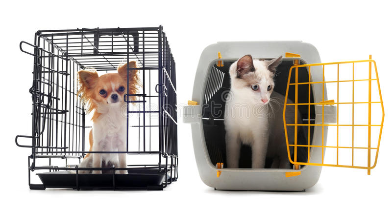 Chihuahua and cat in kennel royalty free stock image