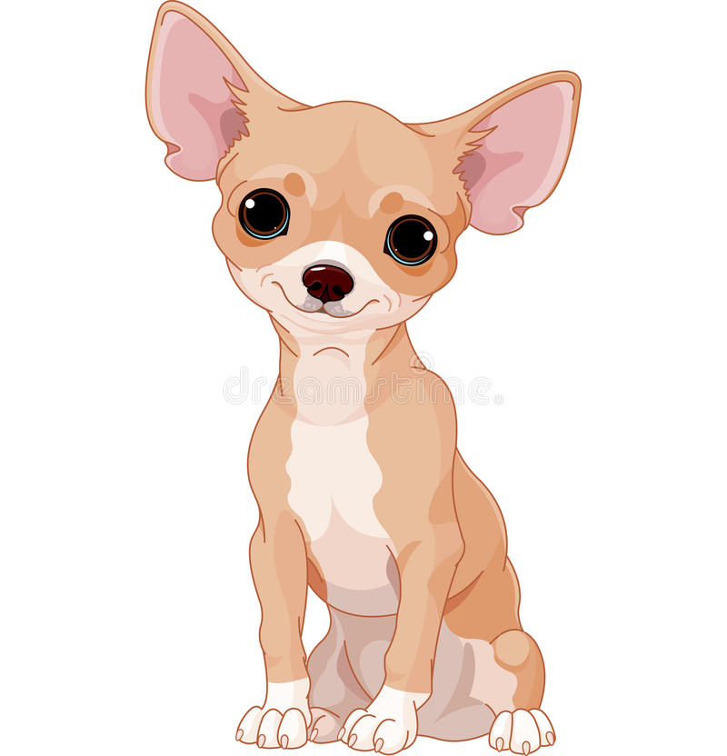 Chihuahua. Cute dog of breed Chihuahua vector illustration