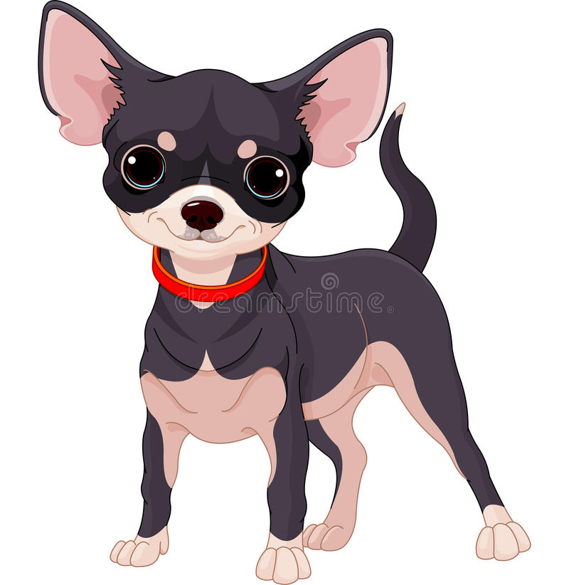 Chihuahua. Cute dog of breed Chihuahua stock illustration