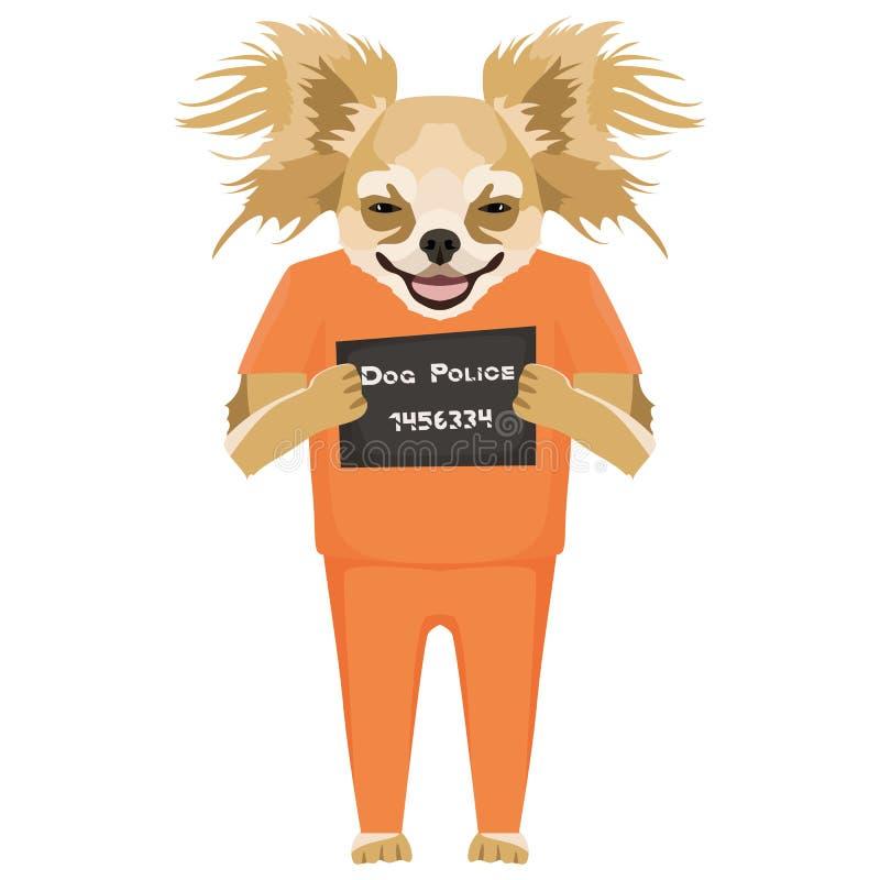 Chihuahua del perro de la ropa de la prisi?n del Mugshot libre illustration