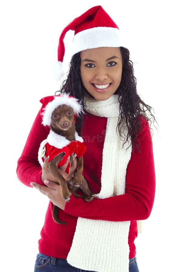 Chihuahua dell'animale domestico e della donna immagini stock